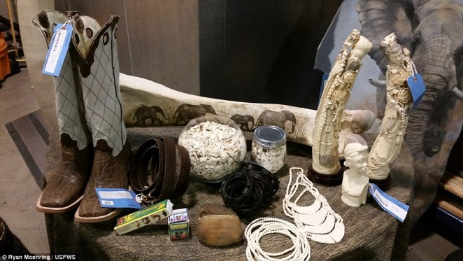 Items confiscated from US ports reveal harrowing items such asboots made of cobra skin, animal bones, and ivory tusks