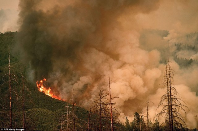 Trees burn in Stanislaus National Forest, near Yosemite National Park, as part of a blaze that has killed one and injured two