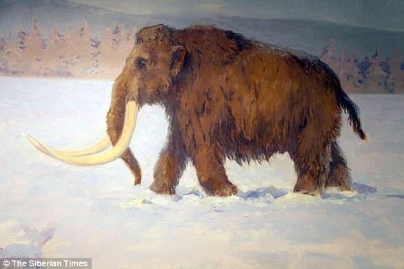 Le Woolly Mammoth est l'un des animaux préhistoriques les mieux connus de la science, car leurs restes ne sont souvent pas fossilisés mais gelés et conservés (impression de l'artiste).