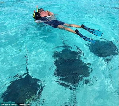Nature: Another Instagram showed Salma enjoying the crystal clear ocean while snorkeling with husband François-Henri Pinault and a group of giant Manta rays