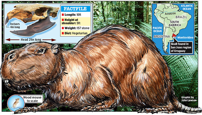 Rat World Discovered Largest