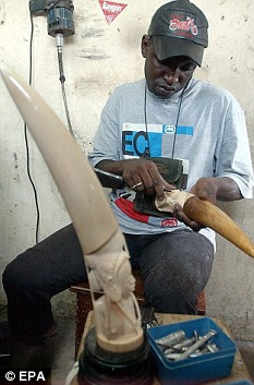 An ivory sculptor from the Ivory coast carves elephant tusks to make jewelry and ornaments