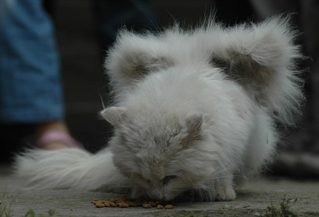 Real cats with wings