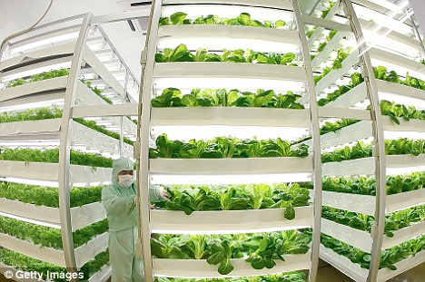 Test tube baby lettuce: This factory in Tokyo can churn out vegetables 24 hours a day, seven days a week