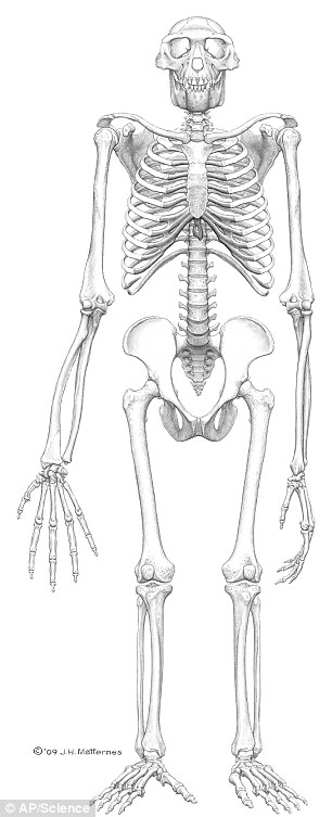 Ardi skeleton found in Ethiopia is closest thing to