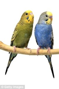 New Carpet Fumes And Birds - Carpet Vidalondon