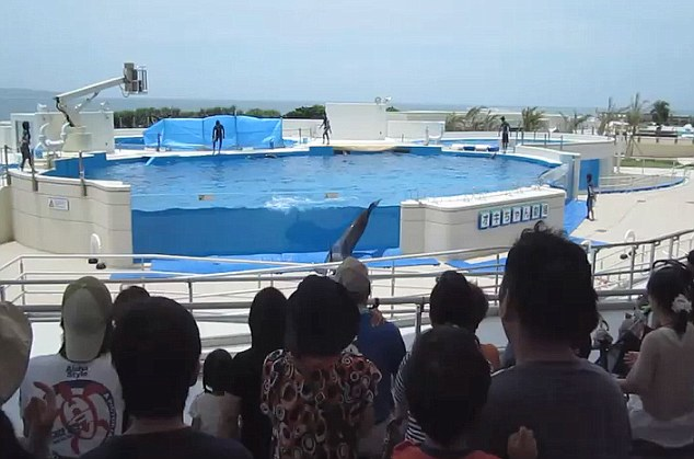 dolphin leaps out of tank
