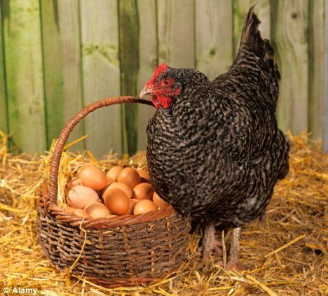 الدجاجة قبل البيضة