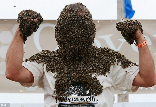 bee beard competition