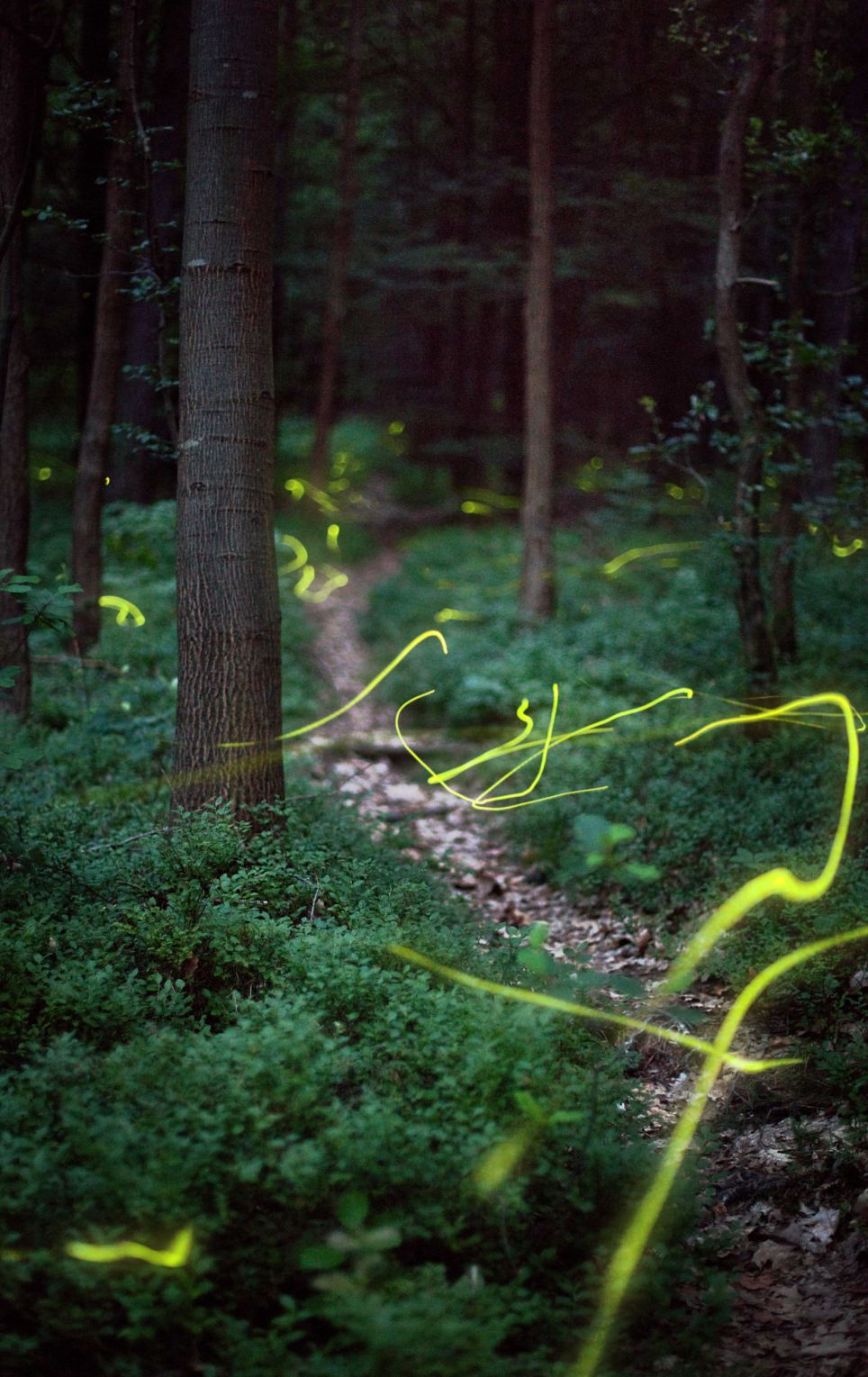 There are many different species of firefly, from a variety that produces no light at all to one that imitates the 'mating' light of other species, to lure hopeful males into becoming supper