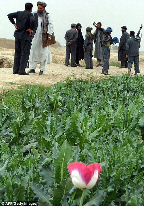 Come down: While opium production has decreased, the price has increased so much that farmers are earning more now than they were last year with less stock