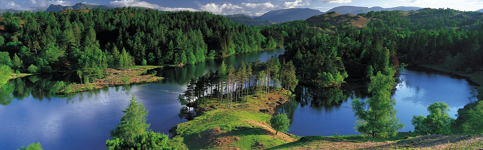 Morning has broken: The tall pines of Tarn Hows in Cumbria shimmer with all the hues of spring, as the heights of Langdale and Helvellyn soar in the distance
