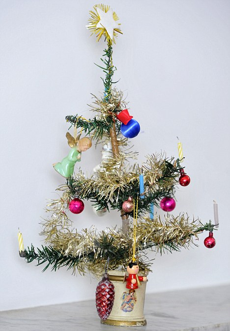 Worlds Oldest Christmas Tree Makes A Welcome Return