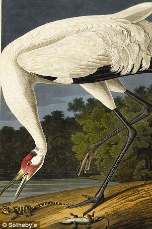 Lot 50: A Hooping Crane