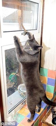 Pepper membuka jendela.