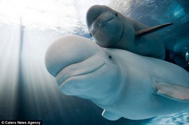 Baby Happy Beluga Whale