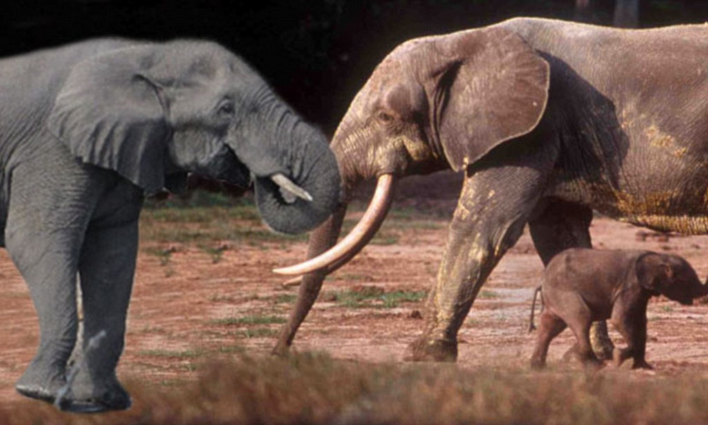 A discovery to trumpeta third species of elephant is