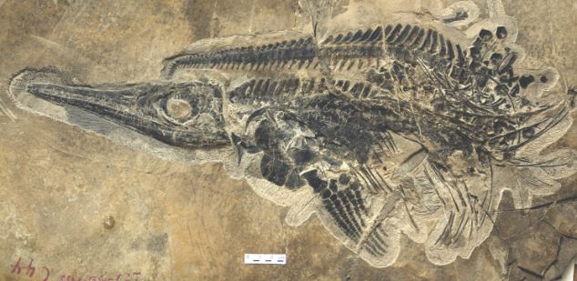 The fearsome ichthyosaur