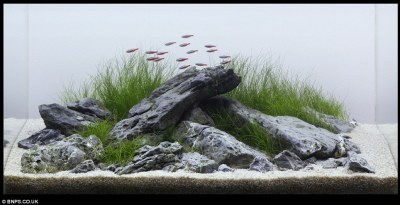 Zen and the art of fish tank maintenance: 'Aquascapers ...