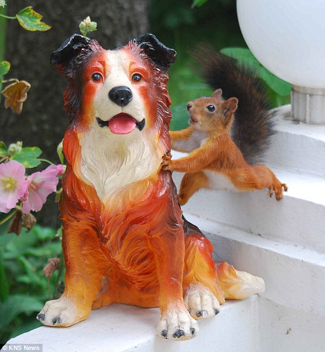Obsession: A red squirrel in a Moscow garden became fascinated with a statue of a dog when it couldn't work out why it did not move like a real animal