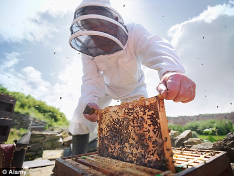 Impact: Researchers found bees responded when mobile phones were used to make and receive calls