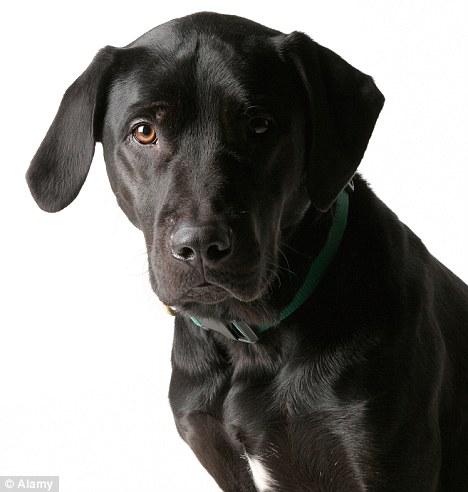 Boy 3 Left With Horrific Facial Injuries As Labrador