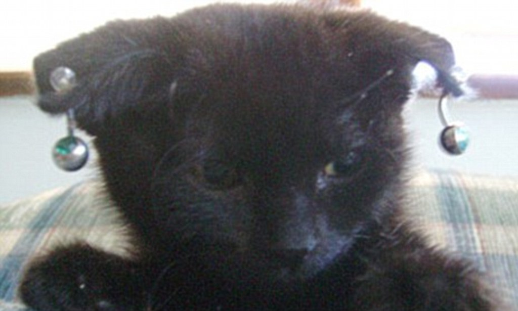 Woman who sold gothic kittens with pierced ears guilty