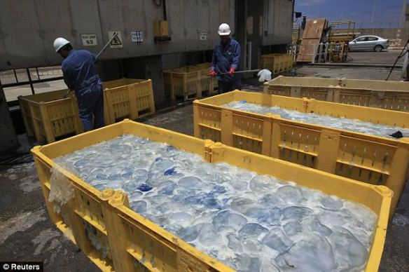 Disruption: Containers filled with jellyfish at Orot Rabin coal-fired power station