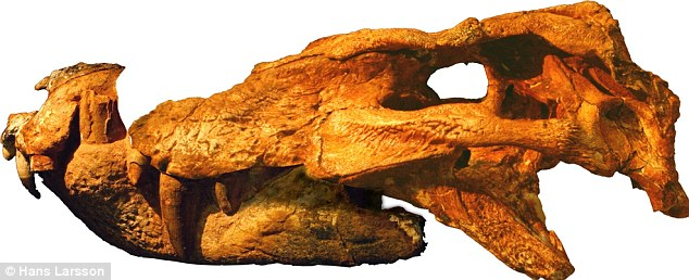 Skull of Pissarrachampsa sera