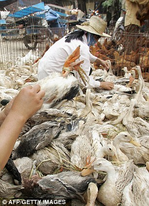 Meat for sale: Market traders with live ducks that will be for the pot