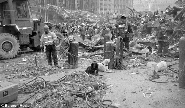 Scout and another unknown dog lay among the rubble at Ground Zero, just two of nearly 100 search and rescue animals who helped to search for survivors