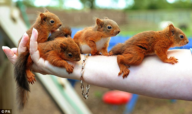 Homeless Baby Squirrels Rescued After Hurricane Katia Blew