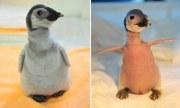 bald baby penguin rejected