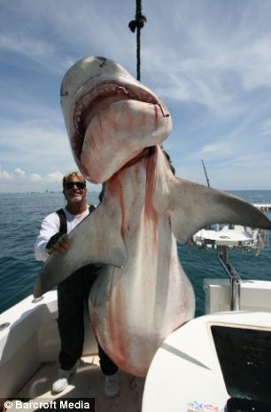 babies sit up chair vaginal steam florida's real shark hunter: he's caught nearly 100,000 sharks and isn't stopping yet - meet the ...
