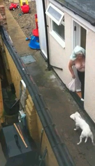 A woman in a bra and trousers with a towel on her head opens the door and appears to whip the dog with a cloth before slamming the door in its face