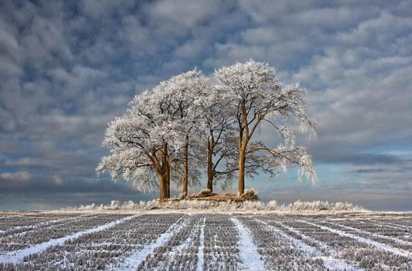 jack frost bites landscape