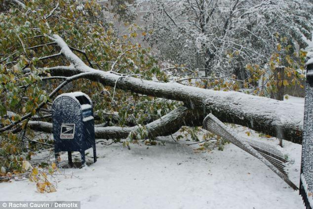 Caído: Una bloques de árboles la ruta en el Bronx, Nueva York