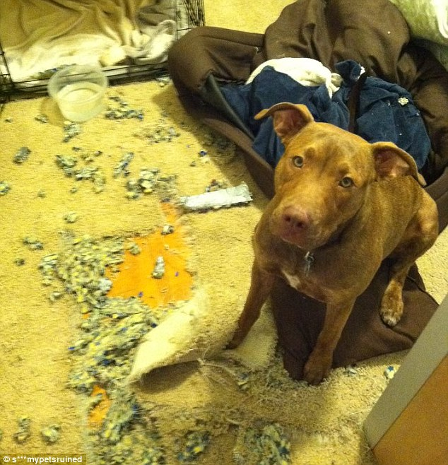 sofa com nyc sky blue living room ideas s*** my pets ruined: animal lovers reveal the damage their ...