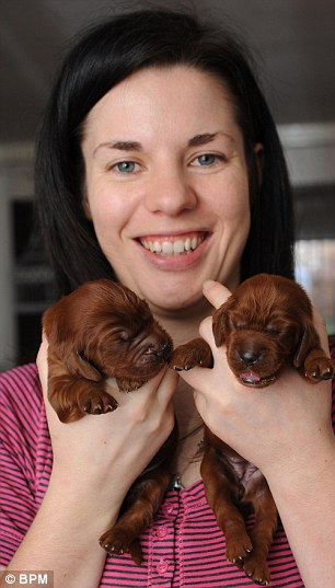 Special delivery: Veterinary nurse Natasha White was stunned when her Irish Setter produced 15 pups