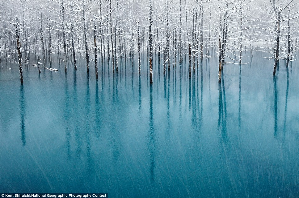 Glowing: Blue Pond & First Snow, by Kent Shiraishi, captured a famous tourist resort in Japan for the nature category's honorable mention as the hot spring ripples below white-frosted trees