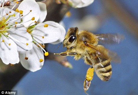 Image result for bees flying