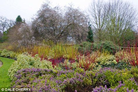 Turn Your Bleak Plot Into A Winter Wonderland Hundreds Of Plants