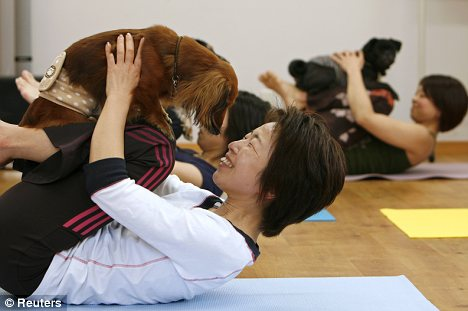 Bow wow: Animal health experts say they have witnessed a dramatic change in stressed or anxiety-prone animals after attending a doga class