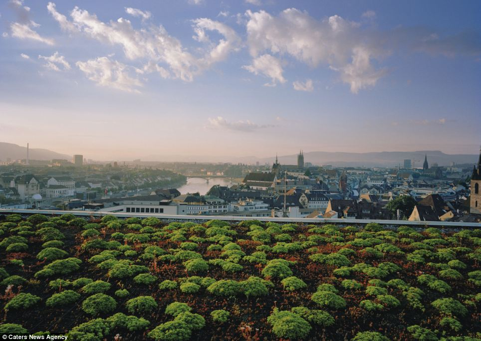 Trees of life: The top of the hospital is one vast, soothing bed of plants