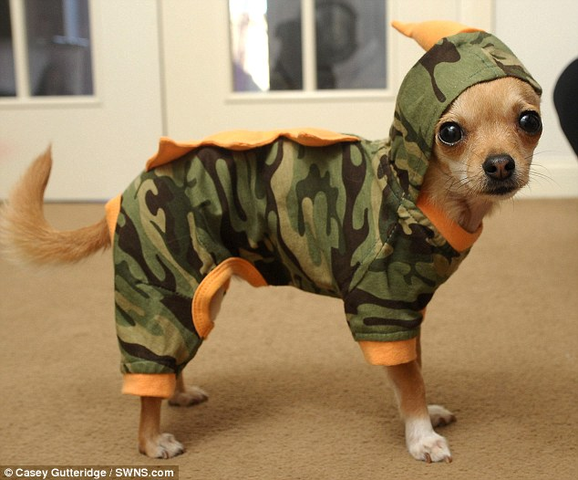 Incognito: Although Rocky is in a camouflage the pampered pooch is still very noticeable in his designer gear