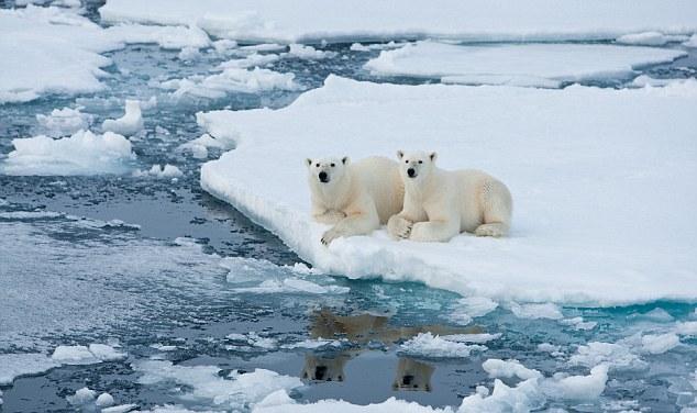 Emotionalising a questão: Recursos para o bem-estar dos ursos polares, por exemplo, ajudar a angariar apoio para 'verdes' agendas
