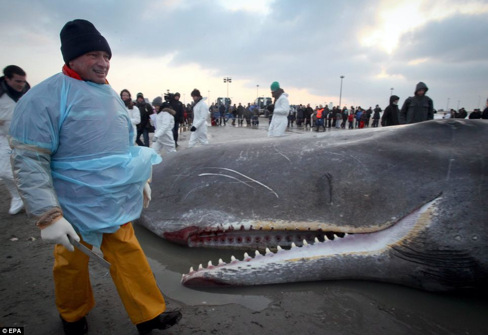 Tourists and local schoolchildren travelled to the chilly coastline to marvel at the 13m-long whale