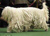 Carpet Dog - Carpet Vidalondon