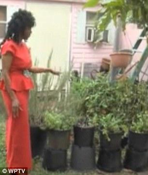 Annette Larkin grows all her food in her back yard