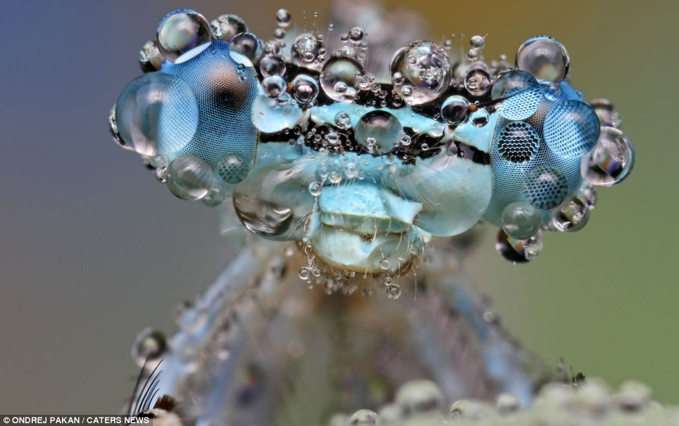 Secret life of a bug: Water droplets make this inset look twice the size